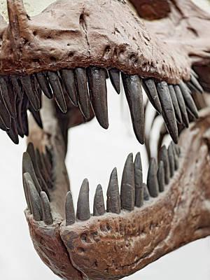 Tyrannosaurus Skull Showing Teeth Art Print