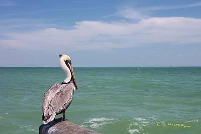 Photograph - Ubiquitous Pelican by R B Harper