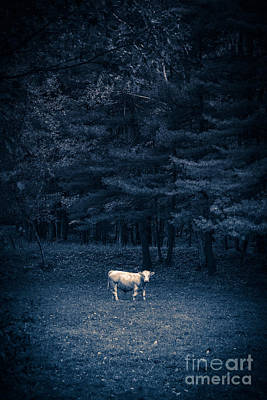 One Horn Photograph - Udder The Moo Night by Edward Fielding