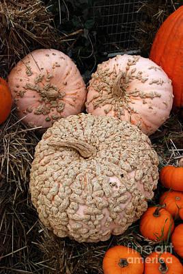 Digital Art - Ugly Gourds by Eva Kaufman