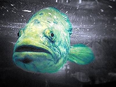 Photograph - Ugly Grouper by Lee Farley