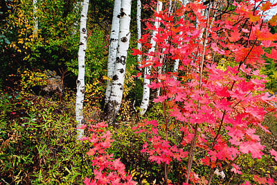 Red Leaf Photograph - Uinta Colors by Chad Dutson