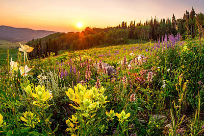 Photograph - Uinta Wildflowers by Emily Dickey