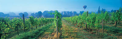 Blue Grapes Photograph - Uk, Great Britain, Sussex, Vineyard by Panoramic Images
