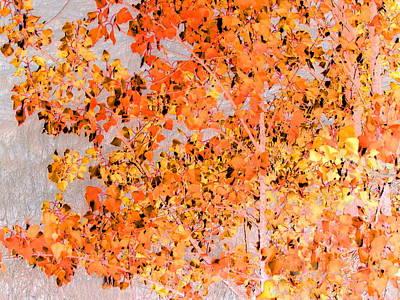 Photograph - Ultra Fall  by Derek Dean