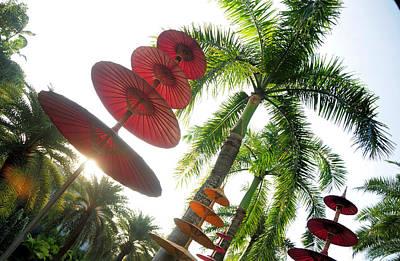 Wall Art - Photograph - Umbrella Palms by Mark Sullivan