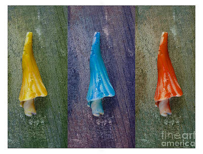Photograph - Umbrella Shell Triptych by Nina Silver