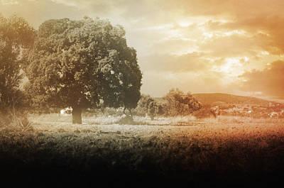 Photograph - Un Jour Dans La Memoire by Taylan Apukovska