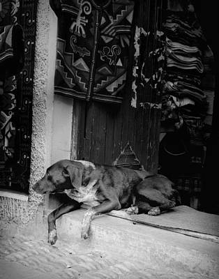 Photograph - Un Perro by Ray Kent