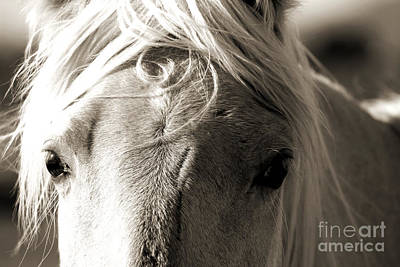 Photograph - Unbrushed Mane by Jackie Farnsworth
