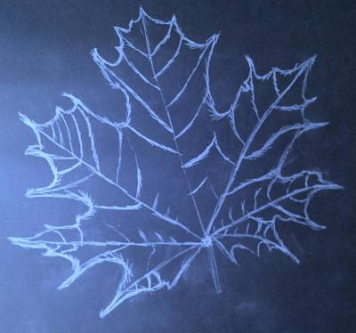 Art Print featuring the drawing Uncertaintys Leaf by Jason Padgett