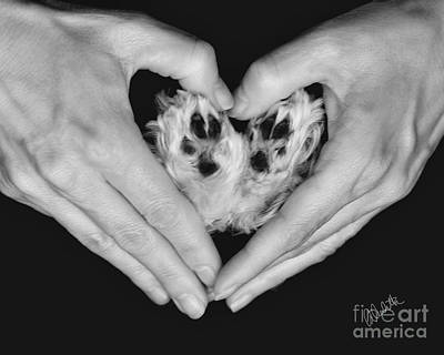 Photograph - Unconditional Love by Andrea Auletta