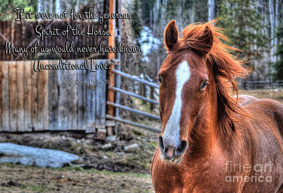 Red Dun Horse Photograph - Unconditional Love by Skye Ryan-Evans