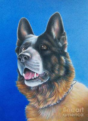 German Shepard Drawing - Unconditional by Pamela Clements