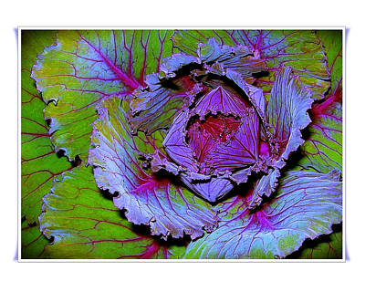 Photograph - Under A Cabbage Leaf by Judi Bagwell