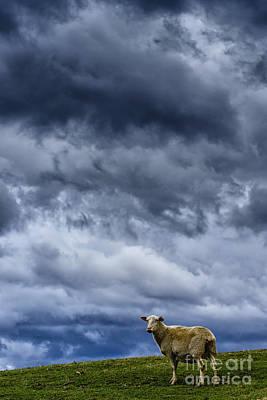 Leaden Sky Photograph - Under A Leaden Sky by Thomas R Fletcher
