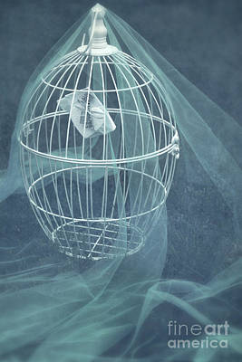 Cage Mixed Media - Under A Veil  by Svetlana Sewell