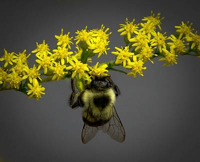 Photograph - Under Bee by Robert Geary