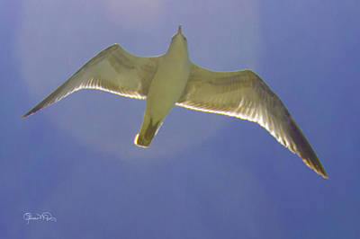 Photograph - Under His Wings IIi by Susan Molnar