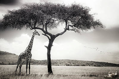 Masai Mara Photograph - Under The African Sun by Piet Flour