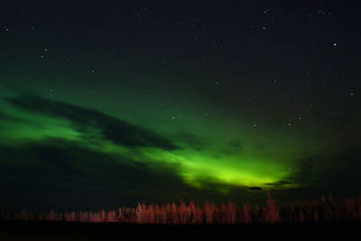 Photograph - Under The Alaskan Sky by Jon Emery