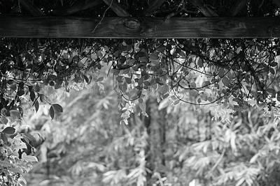 Photograph - Under The Arbor by Sheri McLeroy
