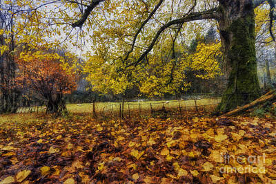 Photograph - Under The Autumn Trees by Ian Mitchell