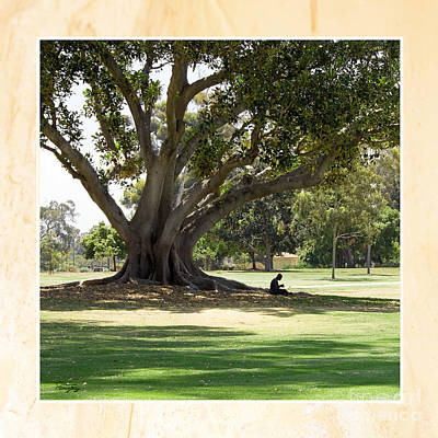 Photograph - Under The Big Old Tree by Gabriele Pomykaj