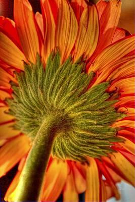 Bold Expressive Floral Photograph - Under The Big Top by Deborah  Crew-Johnson
