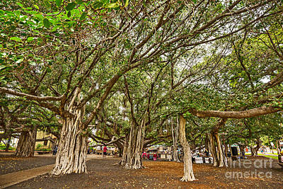 Under The Canopy - Banyan Tree Park In Maui. Art Print
