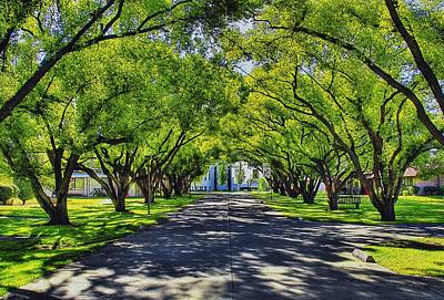 Photograph - Under The Canopy by Wayne Wood