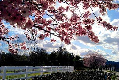 Under The Cherry Blossom Art Print