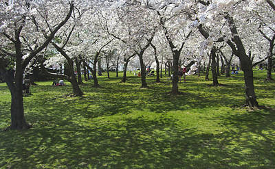 Under The Cherry Blossoms - Washington Dc. Art Print