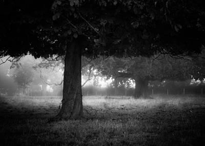 Under The Dark Canopy Art Print