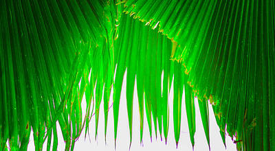 Photograph - Under The Fan Palm by Lisa Cortez