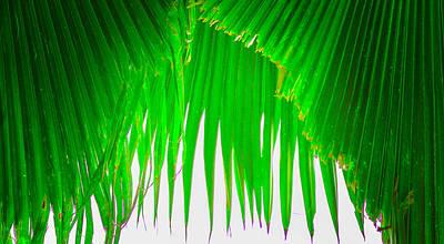 Photograph - Under The Fan Palm by Lisa Cortez
