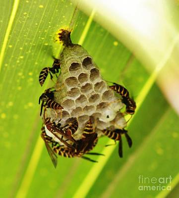 Hornets Nest Photograph - Under The Leaf by Craig Wood