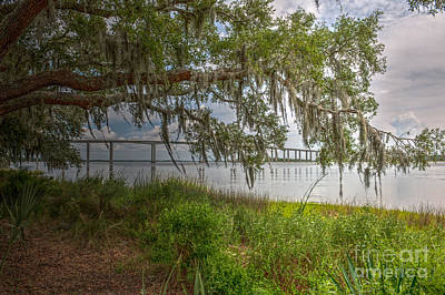 Photograph - Under The Limbs by Dale Powell