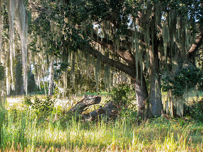 Iphone Case Photograph - Under The Live Oak Tree by Zina Stromberg