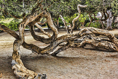 Digital Art - Under The Manzanita by Photographic Art by Russel Ray Photos