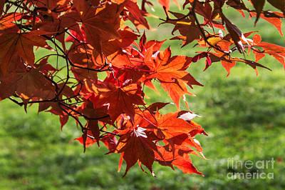 Pop Art - Under The Maple Tree by Arlene Carmel