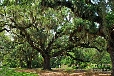 Art Print featuring the photograph Under The Oaks by Bob Sample