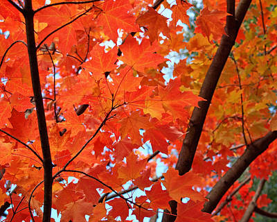 Maple Leafs Photograph - Under The Orange Maple Tree by Rona Black