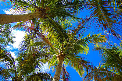 Photograph - Under The Palms by Sean Allen
