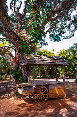 Photograph - Under The Shadow Of The Tree. Eureka. Mauritius by Jenny Rainbow