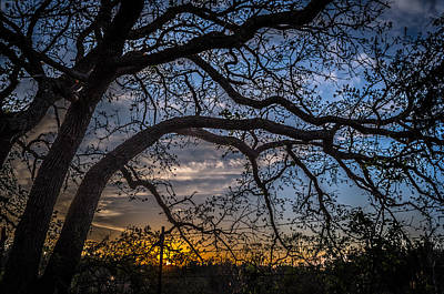 Photograph - Under The Tree And Through The Fence by Kelly Kitchens