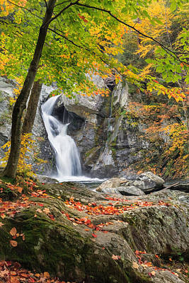 Bash Bish Falls Photograph - Under The Tree by Bill Wakeley