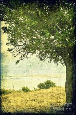 Photograph - Under The Tree by Ioanna Papanikolaou