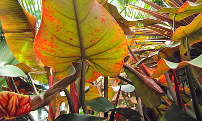 Photograph - Under The Tropical Leaves by Duane McCullough