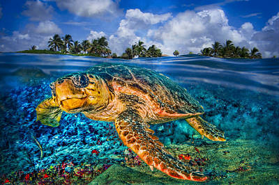 Photograph - Under The Waves by Debra and Dave Vanderlaan